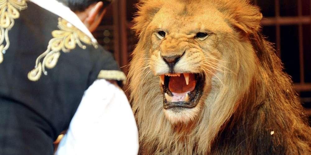 un-numero-de-cirque-avec-un-lion-ce-ne-sera-desormais-plus-possible-en-italie